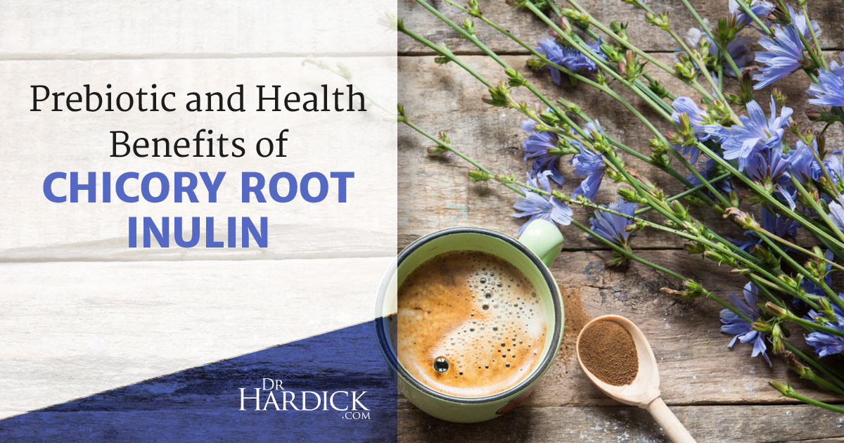 Prebiotic Benefits of Chicory Root Inulin | DrHardick