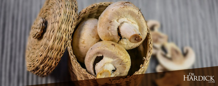 BlogBanner_Mushrooms-Cancer's-Fiercest-Adversary